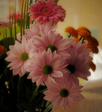 For you by biffobear, photography->flowers gallery