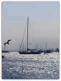 Silver Sailing by ccmerino, photography->boats gallery