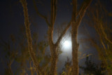 moonlit trees by madmaven, Photography->General gallery