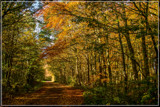 Canopied Path by corngrowth, photography->landscape gallery