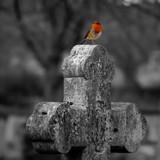 The Guardian by biffobear, photography->birds gallery