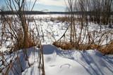 Frozen Marsh by Silvanus, photography->landscape gallery