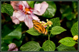 Butterfly 05 of 12  by corngrowth, Photography->Butterflies gallery
