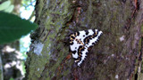 Mystery Moth by braces, photography->butterflies gallery