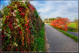 Scenic Country Road by corngrowth, photography->landscape gallery