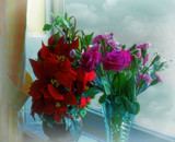Flowers by the Window by biffobear, photography->flowers gallery