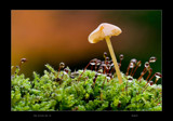 The little Wet by kodo34, photography->mushrooms gallery