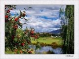 Millbrook by LynEve, Photography->Landscape gallery