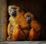 Who's the weirdo by biffobear, photography->animals gallery