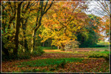 Coastal Forest In The Fall by corngrowth, photography->landscape gallery