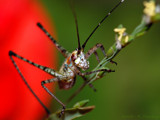 I'm Ready for My Close-Up by ryzst, photography->insects/spiders gallery