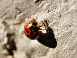 climbing the rock by ro_and, photography->insects/spiders gallery