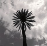 Palm Tree by LynEve, photography->general gallery
