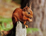 Stumpy by biffobear, photography->animals gallery