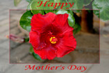 For my mom...... by mmynx34, Photography->Manipulation gallery