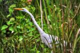 Cautious by Mvillian, photography->birds gallery