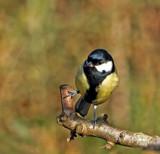 I Love by biffobear, photography->birds gallery