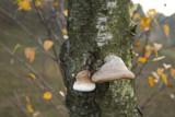 Mushrooms by Gabbels, photography->mushrooms gallery