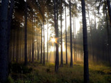 Forrest, Fog, Sun by Larser, Photography->Nature gallery