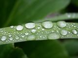 Natural Magnifying Glasses by hobgoblin, Photography->Macro gallery