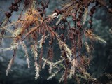 NATURE 49 by picardroe, photography->nature gallery