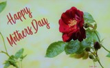 Happy Mothers Day by CDHale, photography->flowers gallery