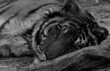 Restful But Alert by tigger3, photography->animals gallery