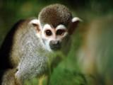 Cheeky Little Monkey by burnzdog, Photography->Animals gallery