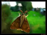 Look In - Look Out by Larser, Photography->Butterflies gallery