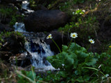 Wild Flowers and Waterfall by fotobob, Photography->Waterfalls gallery