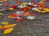 Floating Leaves by jsnaher, photography->still life gallery