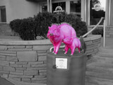 The Pink Javelinas of Sedona by Lightpainter, photography->manipulation gallery