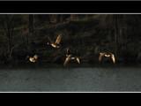 Into the Sun by dwdharvey, Photography->Birds gallery