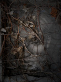 Trash Art 0302 by rvdb, photography->manipulation gallery