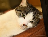 Mr. Stewie by tigger3, photography->pets gallery