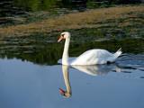 Sam I Am by SatCom, Photography->Birds gallery