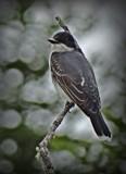 Bird # 32 by picardroe, photography->birds gallery
