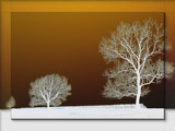 just three trees... by fogz, Photography->Manipulation gallery