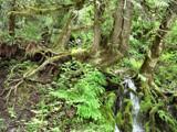 Rootbound Waterfalls by verenabloo, Photography->Waterfalls gallery