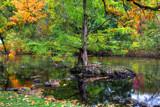Image: Enchanted tree