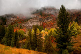 Autumn in the Canyons III by nmsmith, photography->landscape gallery