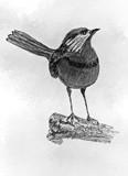 A Little Bird Sketch by bfrank, illustrations gallery