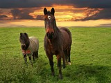 Mare & Foal by LANJOCKEY, Photography->Animals gallery