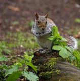 Not often by biffobear, photography->animals gallery