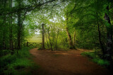 The Path by biffobear, photography->landscape gallery
