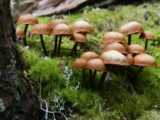 Huddle by mayne, Photography->Mushrooms gallery