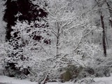 1st Snow by thebitchyboss, Photography->Nature gallery