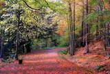 Just by biffobear, photography->landscape gallery
