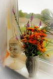 Flowers by the window by biffobear, photography->flowers gallery