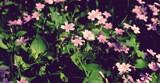 Bathing in the sun by roxanapaduraru, photography->flowers gallery